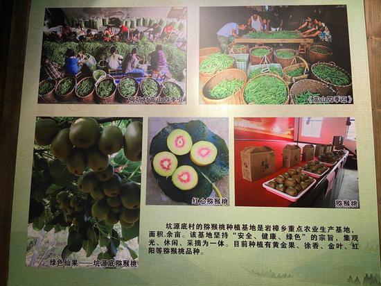 巖樟鄉農產品資料海報。  項菁 攝