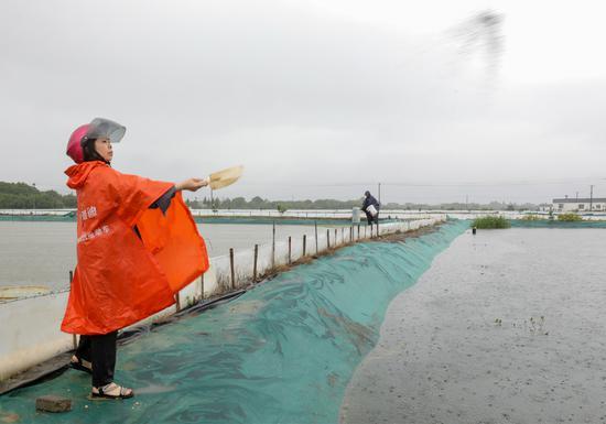 幫扶對象在經志愿者指導后向自己的產業里給河蟹撒搭配好的飼料  譚云俸 攝