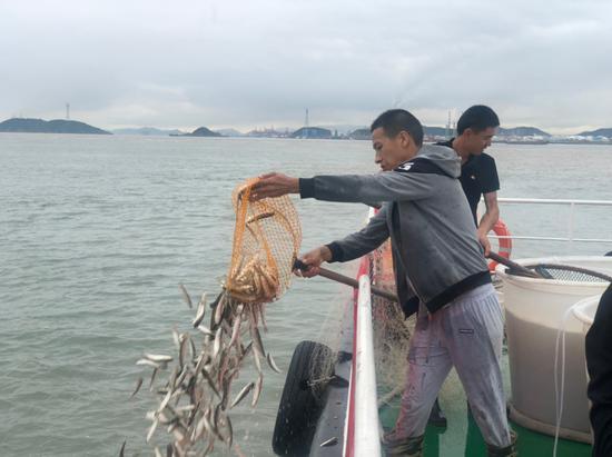鱼苗被倒入大海。镇海宣传部 供图