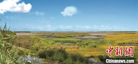新疆玛纳斯国家湿地迎来候鸟繁殖高峰季 筑巢安家创历年之最
