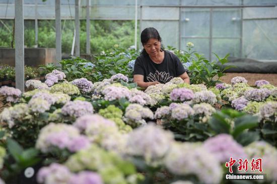 6月23日,贵州省铜仁市沿河自治县中界镇高峰村有机生态农业产业园,工人在大棚内劳作。中新社记者 瞿宏伦 摄