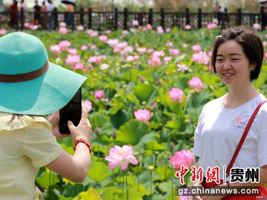 2020年6月26日,贵州省毕节市金沙县西洛街道群立社区千亩荷花相继盛开,吸引游客观光拍照   史开心 摄