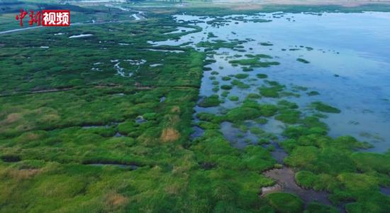 新疆瑪納斯國家濕地公園端午迎客 游客生態旅游過節
