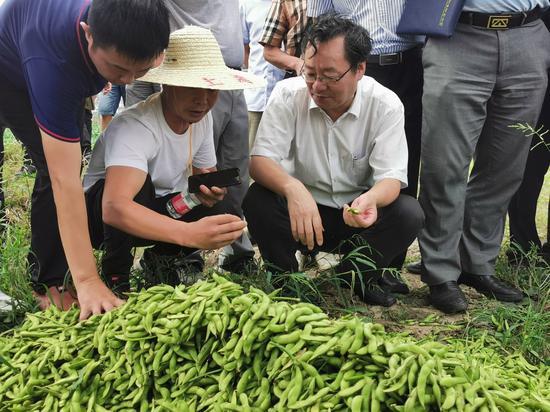 浙江省农科院专家查看菜用大豆生产。浙江省农科院 供图