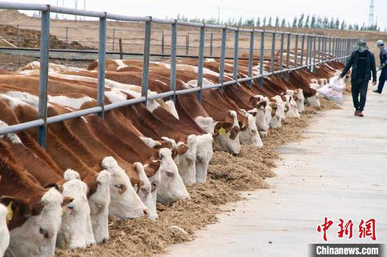 投资10亿元 新疆华凌集团将在巴州和静肉牛养殖达到2万头