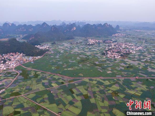 """中國""""玉藕之鄉""""荷花盛放 現荷塘月色景觀"""