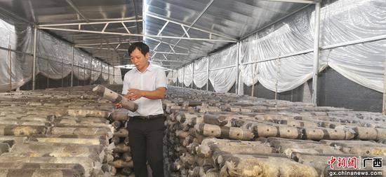 廣西融水永富生態農業有限公司負責人陳錦興在食用菌基地。