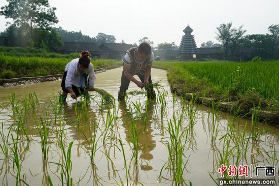 韋志東夫婦在微田園勞作。