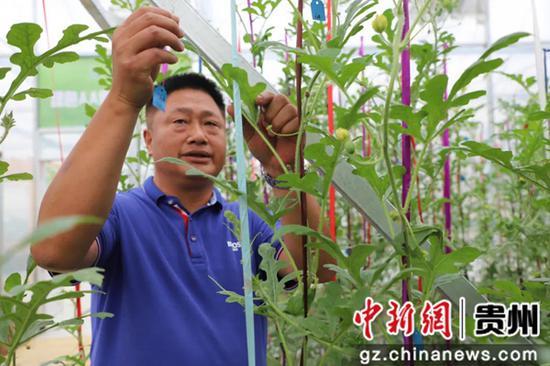 贵州毕节金海湖新区常丰社区:强产业 保民生 促就业