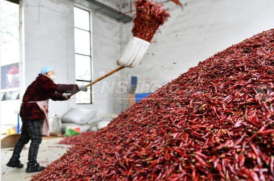 中国辣椒城2020上半年交易量达10万吨