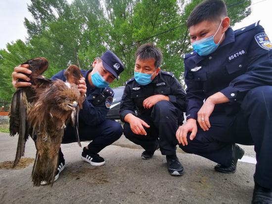 新疆阿勒泰边境派出所民警救助国家二类保护动物大鵟