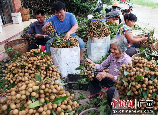 2020年中国(平南)富硒石硖龙眼节将举办 助力农民增收