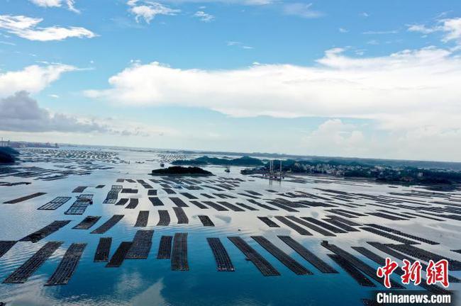 """航拍广西钦州七十二泾""""万亩""""大蚝养殖基地 场面壮观"""