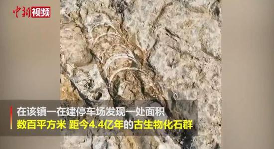 澳门金沙网上平台桐梓一工地挖出4.4亿年前古生物化石群