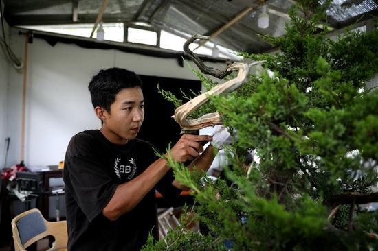 柳乐德的儿子柳俊杰也爱上盆景艺术 吴建勋供图