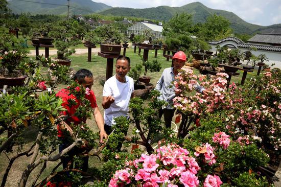 柳乐德向员工讲解杜鹃盆景的养护方法 吴建勋供图