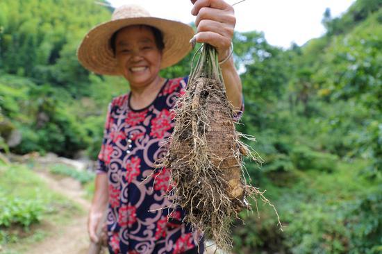 石塔底自然村高山蔬菜品质较好 衢江传媒集团提供