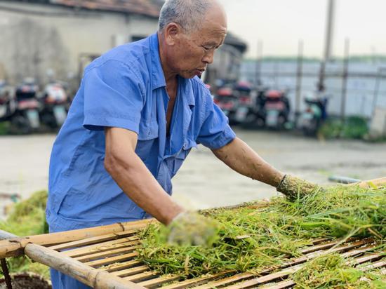 农民处理收割下的稻谷。 吴兴刚 摄