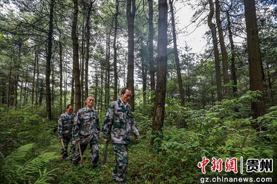 贵州毕节护林三兄弟 38年用双脚丈量5.33万亩林场
