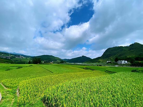 丹寨稻田。 受訪者供圖。