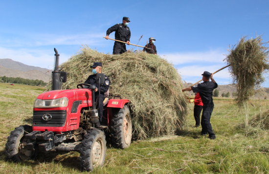 新疆阿勒泰:民警助牧民收割牧草