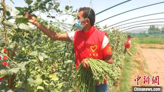 """新疆喀什:""""抗疫""""不误农事 志愿服务助秋播秋收"""