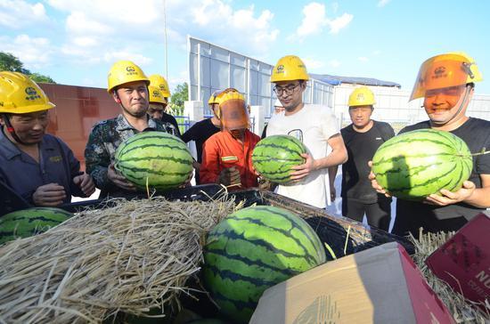 为员工发放西瓜,每人每天一个。龙杰 摄