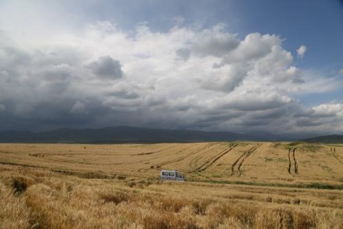 新疆昭苏高原100万亩晚熟小麦开镰收割