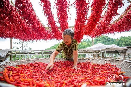 村民在貴州省畢節市大方縣羊場鎮隴公村整理晾曬編好的辣椒。 羅大富 攝