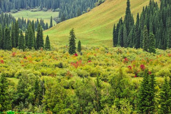 新疆尼勒克县:涵养青山绿水抱得金山银山