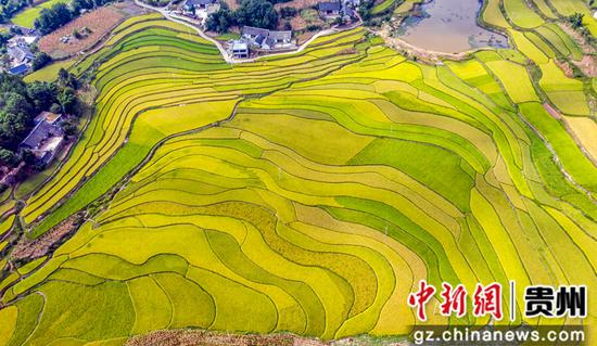 2020年9月3日,在贵州省毕节市黔西县锦星镇洪湖村拍摄的梯田景色(无人机照片)。范晖摄
