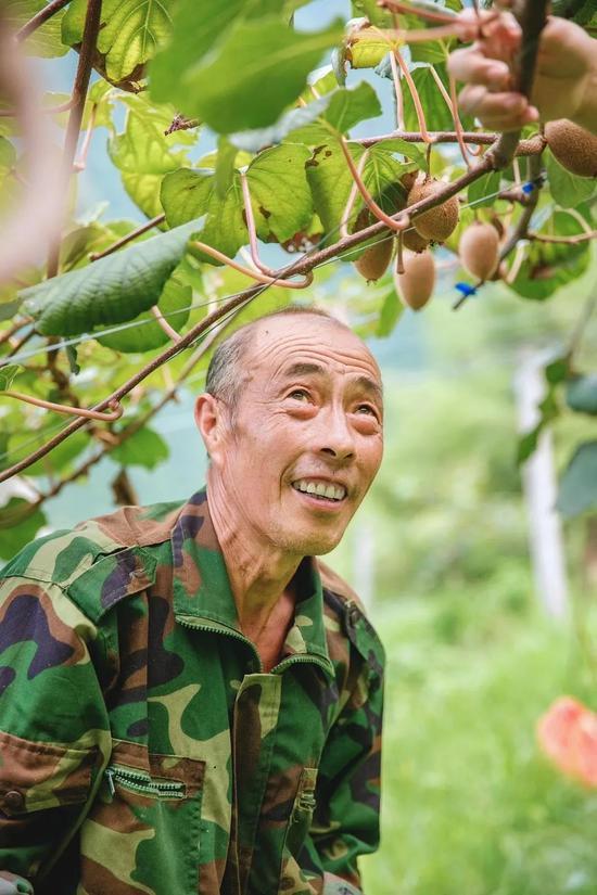 """72岁玩直播 浙江遂昌""""猕猴桃爸爸""""种出的致富经"""
