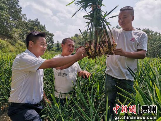 生姜种植户杨盛方(中)给龙山支行信贷员介绍生姜情况。