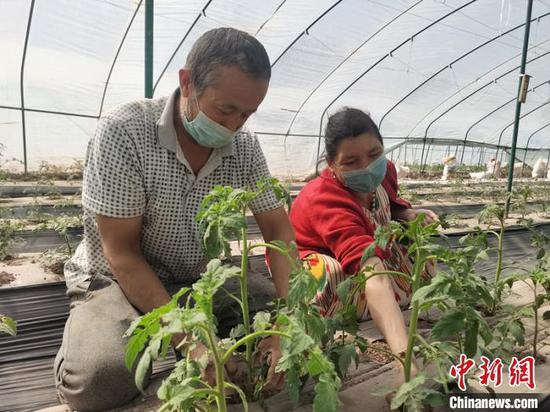 新疆喀什亚尔贝希村脱贫记:拱棚种植致富民众