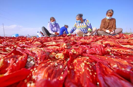 新疆库车市:天然晾晒场 晒出丰收红