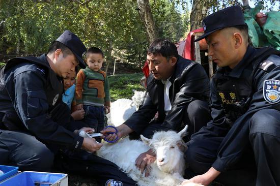 民警与牧民正在为一只受伤的羊进行腿部包扎。