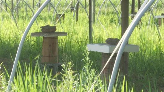 蜂箱静卧在草地上。三门县委宣传部供图