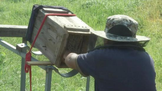 蜂农在取蜜。三门县委宣传部供图