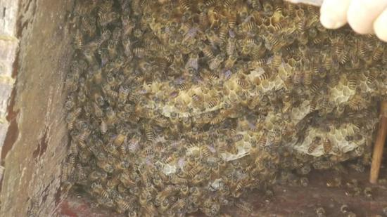 蜜蜂酿蜜。三门县委宣传部供图