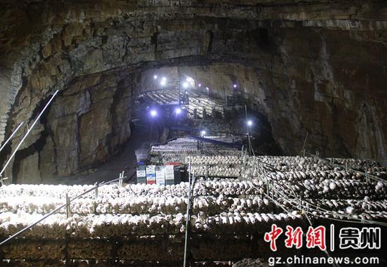 鼎新乡洞中养菇 李蕾 摄