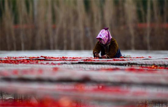 新疆巴州:秋季获丰收村民喜笑颜开