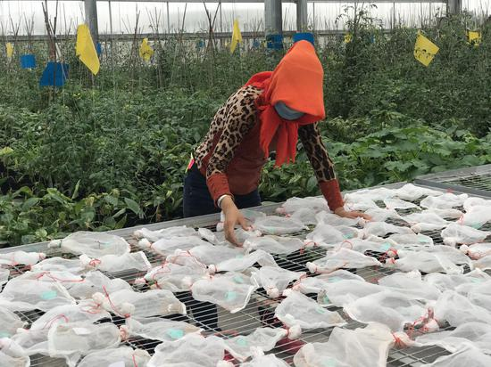 宁夏石嘴山:让种子走向全国