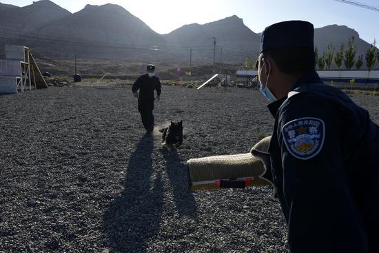 新疆克州康苏边境检查站积极开展警犬综合训练