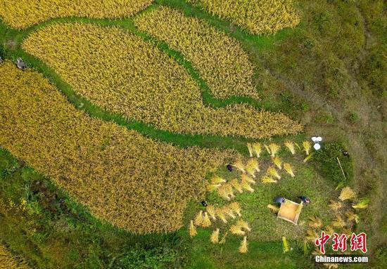 9月30日,航拍贵州省贵阳市高坡苗乡的收获季景象。(无人机拍摄) 中新社记者 侯宇 摄