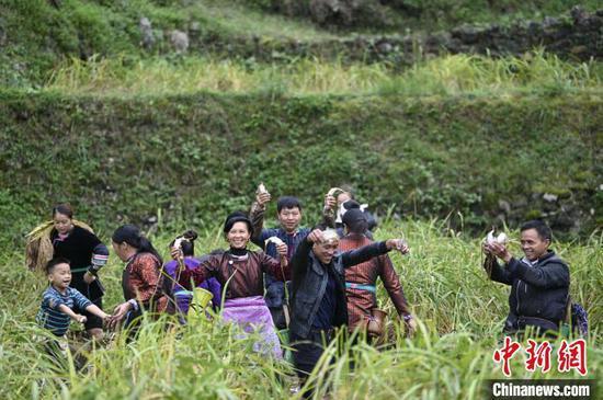 高增乡建华村侗族村民在抓稻田鱼。 吴德军 摄