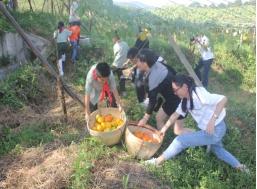 参与丰收节活动。煤山镇供图