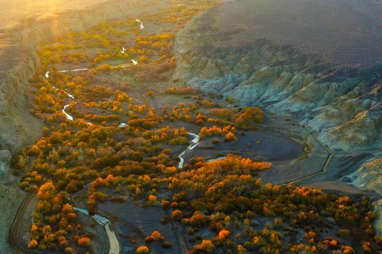 10月10日,乌尔禾区白杨河大峡谷景区胡杨林的航拍画面。闵勇 摄