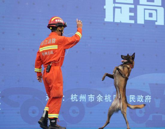 一位消防队员演示搜救犬训练。  李子光(通讯员)