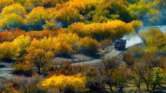 10月5日,工程车辆在白杨河大峡谷景区改造现场穿梭。闵勇 摄