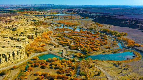 10月5日,乌尔禾白杨河大峡谷景区胡杨林的航拍镜头。闵勇 摄